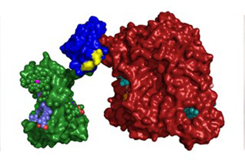Team develops photosynthetic proteins for expanded solar energy conversion