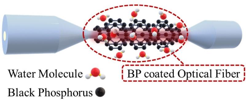 Researchers Develop a Black Phosphorus All-fiber Humidity Sensor