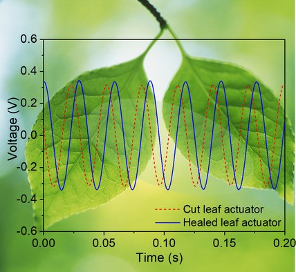 Smart dielectric elastomers for self-healing soft robots